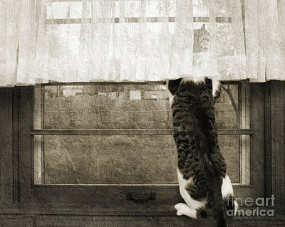 Andee Design Monochrome Photograph - Bird Watching Kitty Cat Bw by Andee Design