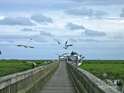 Photograph - Bird Watching by Nancy Patterson
