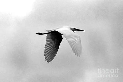 Photograph - Bird2 by David Benson