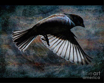 Photograph - Bird7 by Jim Wright