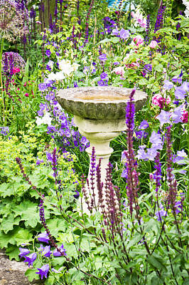 Bird Bath Photograph - Birdbath by Tom Gowanlock