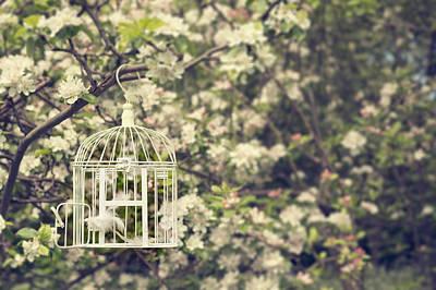 Birdcage In Blossom Art Print by Amanda Elwell