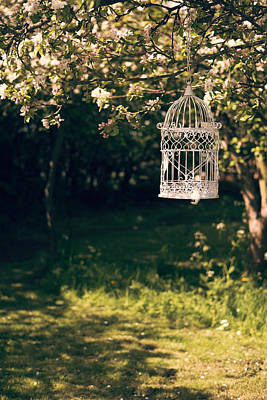 Birdcage In The Orchard Art Print by Amanda Elwell