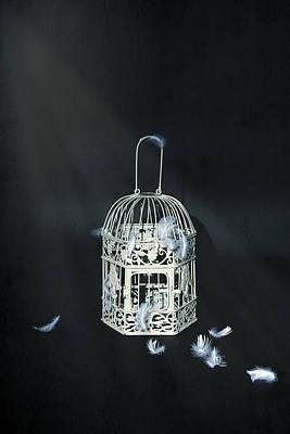 Aviary Photograph - Birdcage by Joana Kruse