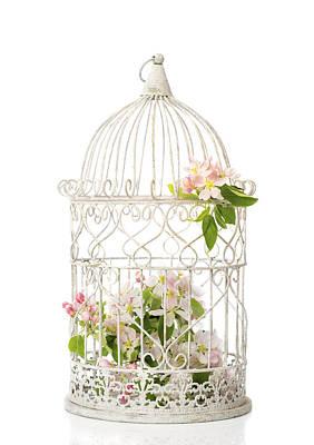 Birdcage Photograph - Birdcage Of Spring Blossom by Amanda Elwell