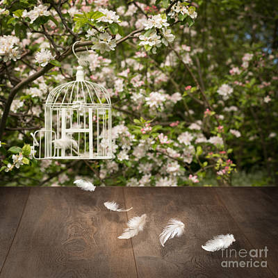 Old Plank Tables Photograph - Birdcage With Feathers by Amanda Elwell