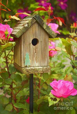 Photograph - Birdhouse by Lena Auxier