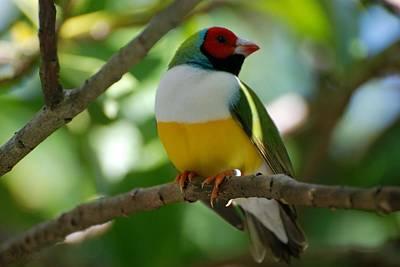 Photograph - Birdie by Rob Hans