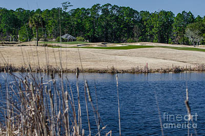 Photograph - Cattail Pond by Dale Powell