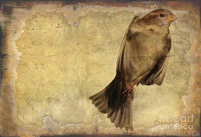 Photograph - Birdness 2 by Jim Wright