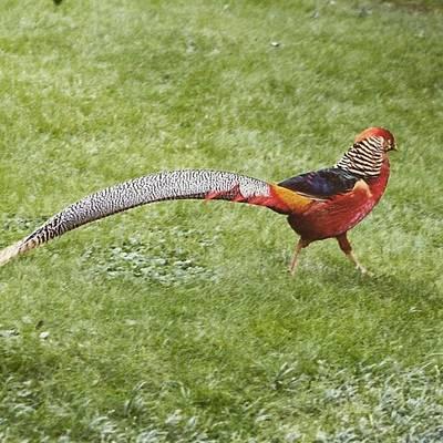 I Phone Photograph - Bird Italy @italy  Photograph: Gidon by Gidon Pico