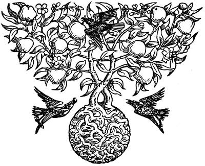 Blackbird Drawing - Birds And Fruit Tree Engraving by