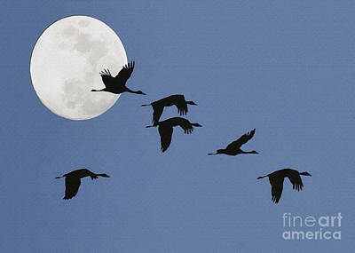 Photograph - Birds And Moon Impasto by Sharon Foster