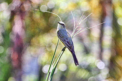 Photograph - Birds Are Bliss by Peggy Collins