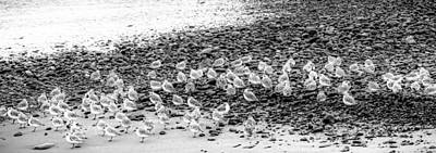 Photograph - Birds At Seashore by Dave Hall