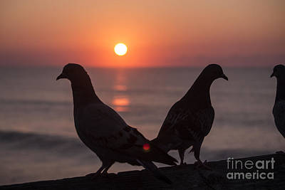 Photograph - Birds At Sunrise by Nelson Watkins