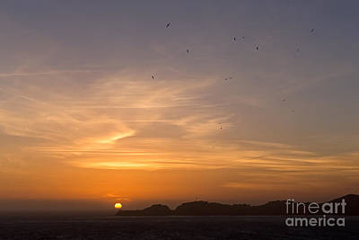 Photograph - Birds At Sunset by Kate Brown