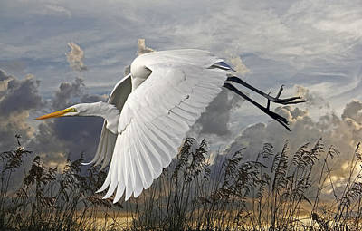 Photograph - Birds - Beach Beauty - Great Egret by HH Photography of Florida