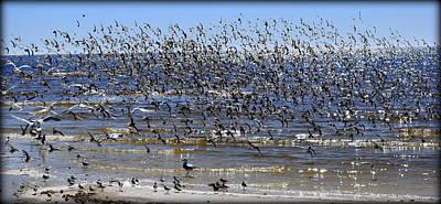 Photograph - Birds Birds Birds 1 by Sheri McLeroy