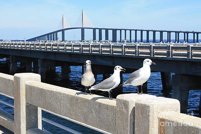 Photograph - Birds By Sunshine Skyway by Danielle Groenen
