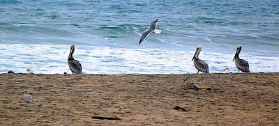 Photograph - Birds Day At The Beach by AJ  Schibig
