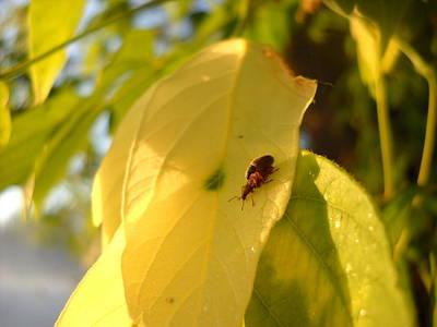 Photograph - Birds Do It Bees Do It Bugs Do It by Kent Lorentzen