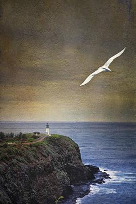 Photograph - Bird's Eye by Belinda Greb