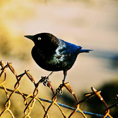 Photograph - Bird's Eye by Eric Tressler