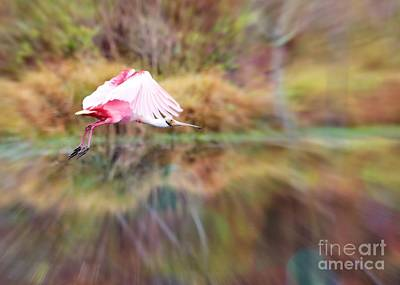 Digital Touch Photograph - Birds Eye View by Carol Groenen