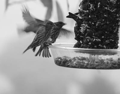 Photograph - Birds Feeding by Ron Roberts