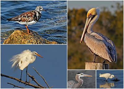 Birds - Florida Bird Collage Art Print by HH Photography of Florida
