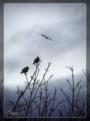 Photograph - Birds For Breakfast by Glenn Feron
