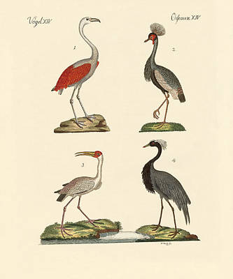 Demoiselle Crane Drawing - Birds From Hot Countries by Splendid Art Prints