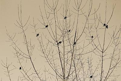 Photograph - Birds Gather by Michael Saunders