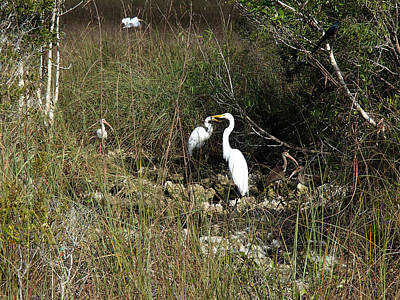Becky Photograph - Birds Gathering At The Everglades Seep by Becky Erickson