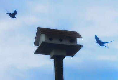 Birdhouse Photograph - Birds In Flight by Cathy Lindsey