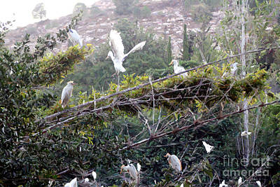 Landscapes Kadek Susanto - Birds in Flight by Doc Braham