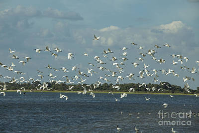 Photograph - Birds In Flight by Patricia Hofmeester