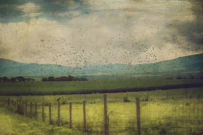 Birds In The Cornfield Art Print by Kathy Jennings