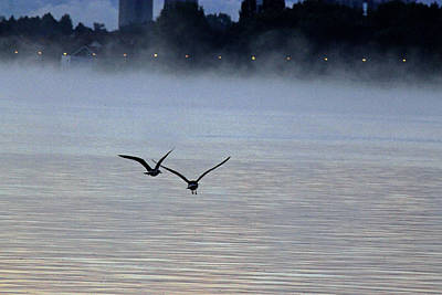 Photograph - Birds In The Mist by Tony Murtagh