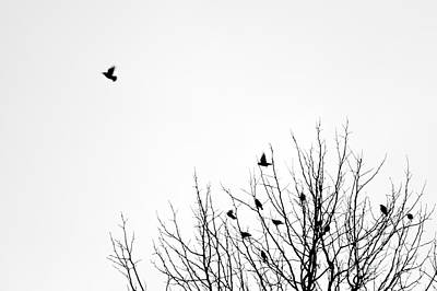 Firefighter Patents Royalty Free Images - Birds in tree Royalty-Free Image by Jim Corwin