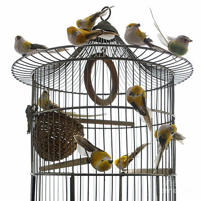Birds Inside And Outside A Cage Art Print by Bernard Jaubert