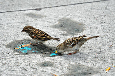 Photograph - Birds Like Cotton Candy by Teresa Blanton