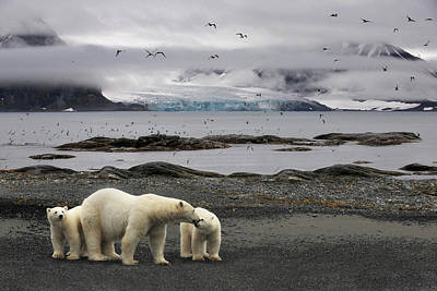 Polar Bear Photograph - Birds by Mathilde Collot