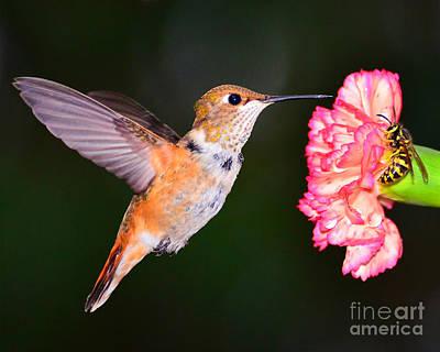 Photograph - Birds N Bees by Jack Moskovita