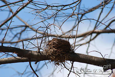 Photograph - Bird's Nest 20120410_96a by Tina Hopkins