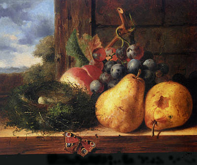 Birds Nest Butterfly And Fruit Art Print by Edward Ladell