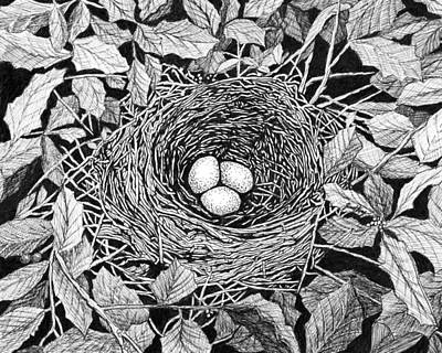 Drawing - Bird's Nest by Janet King