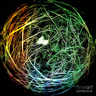 Photograph - Bird's Nest Pop Art by Edward Fielding