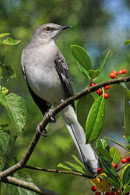 Photograph - Birds - Northern Mockingbird by HH Photography of Florida